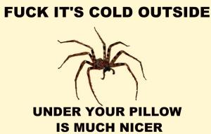 cold spider