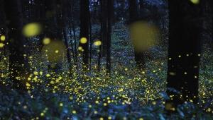 Firefly-Slider1920x1090