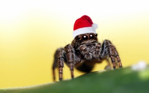 Christmas-hat-spider_1920x1200