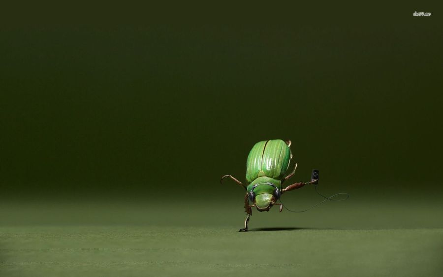 dancing beetle