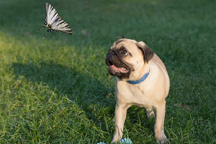 puppies and insects
