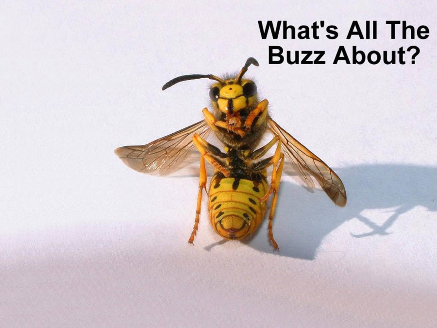 funny-insect-wallpaper